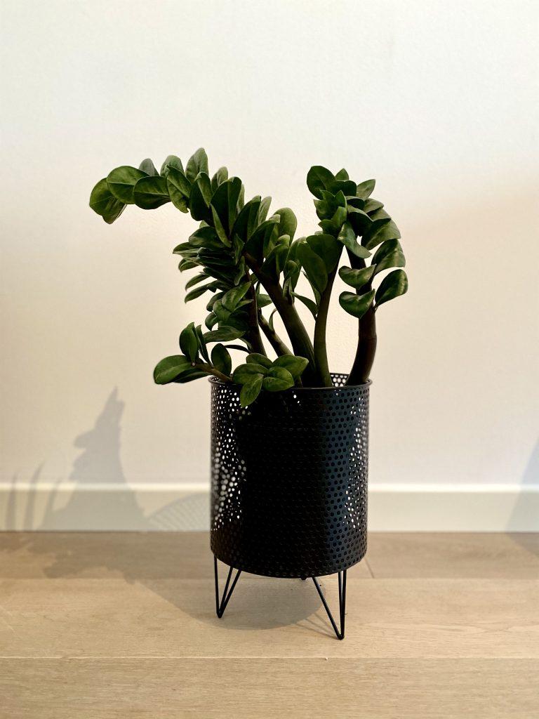 piante da interno per buio
