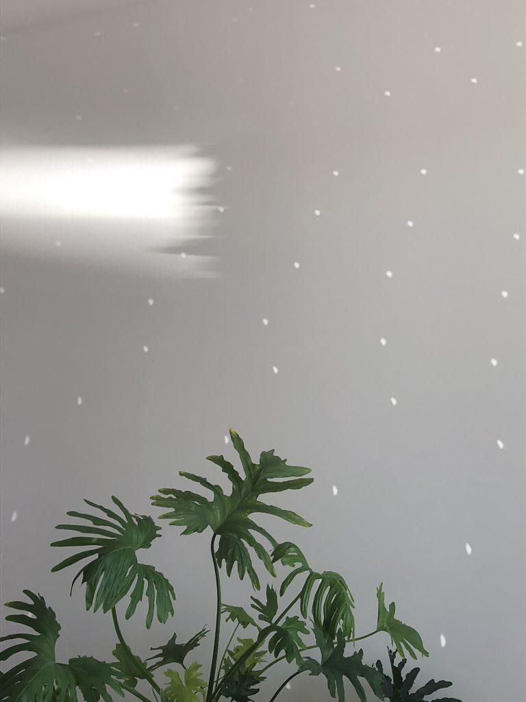 Piante da appartamento resistenti al buio 5