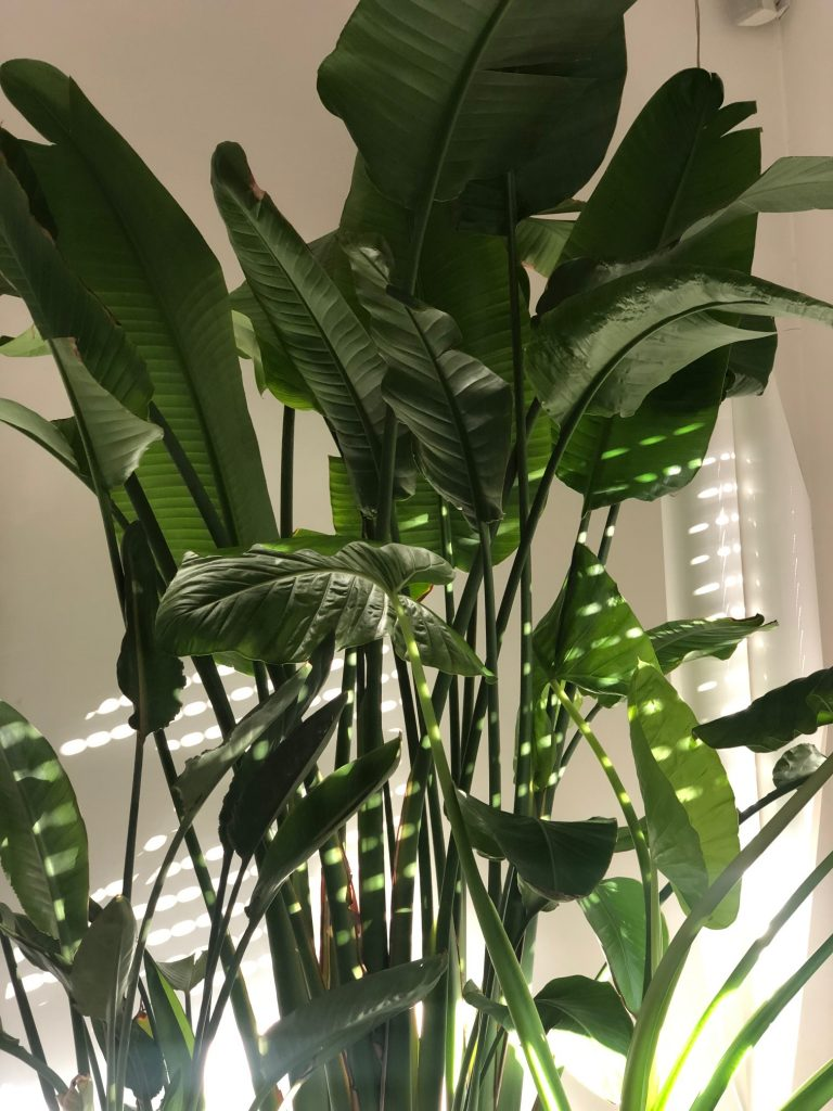 romatropicale_plant lovers_8