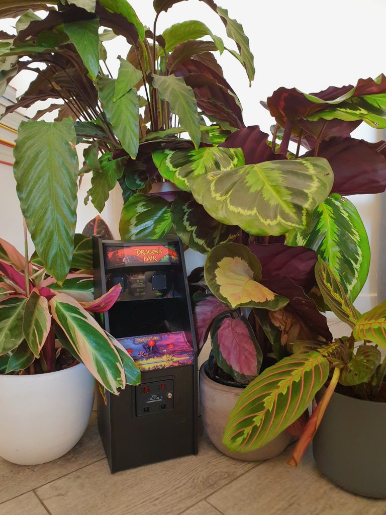 romatropicale_plant lovers_6