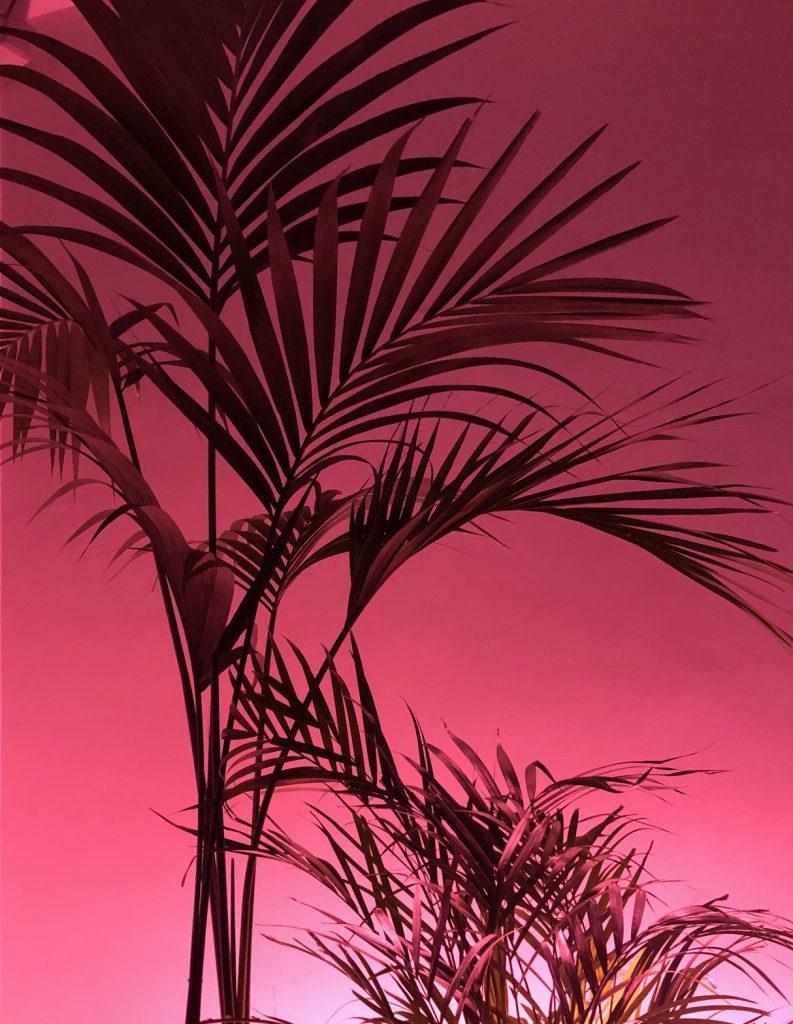 romatropicale_plant lovers_4