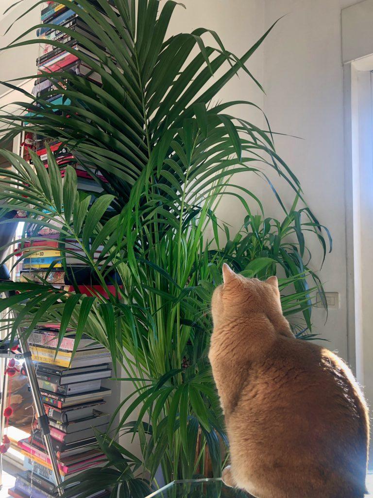 romatropicale_plant lovers_2