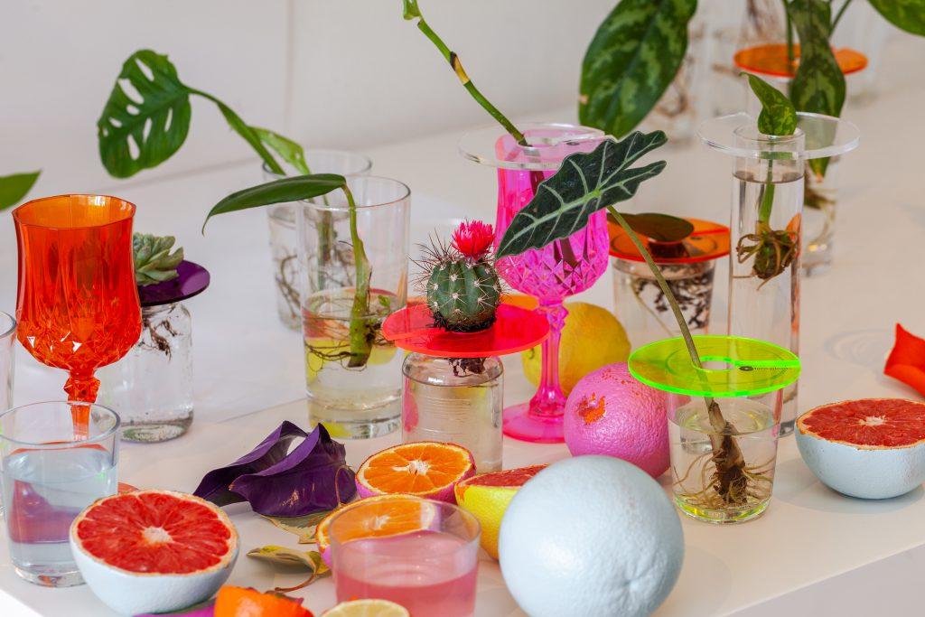 piante e design
