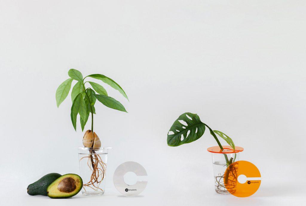 claroplants