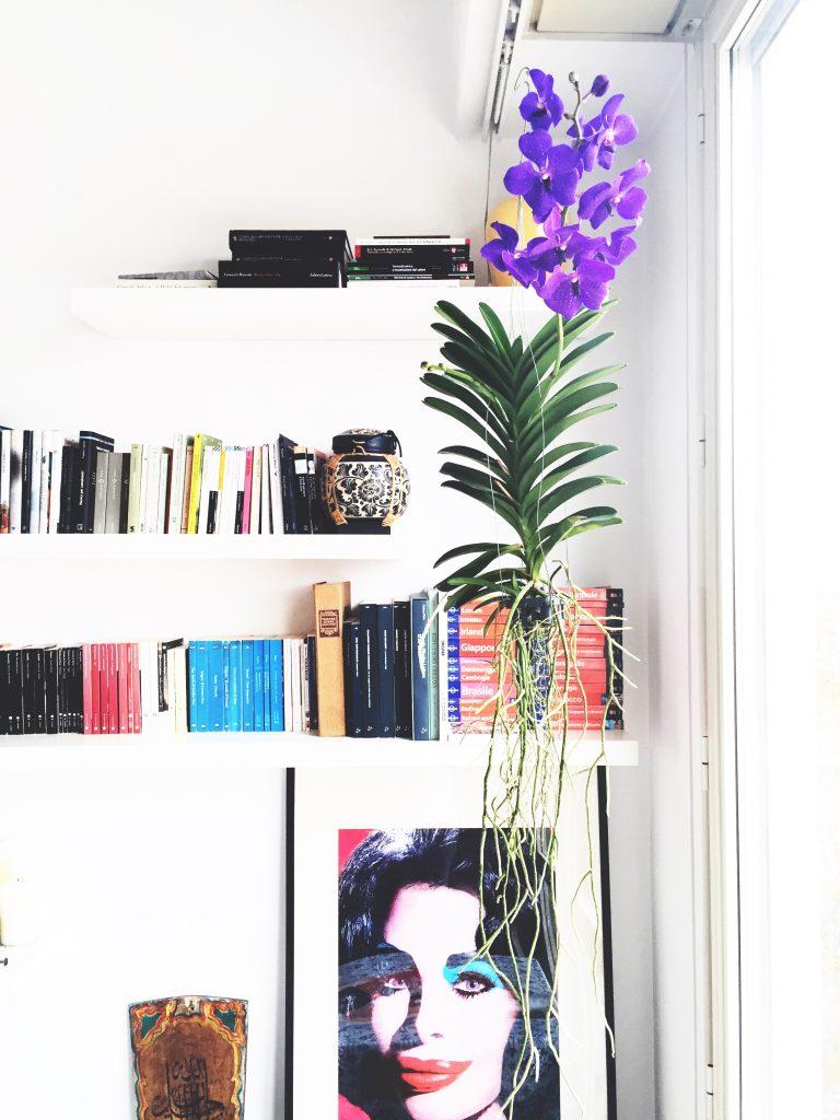 orchidea da interno