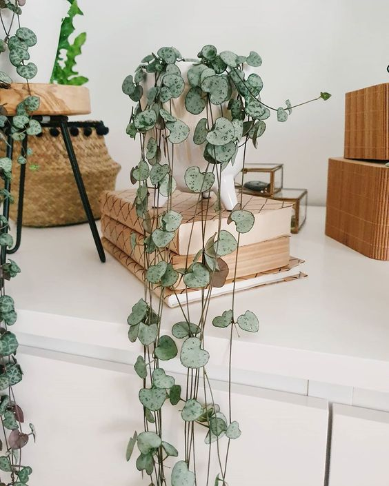piante-pendenti-cuore