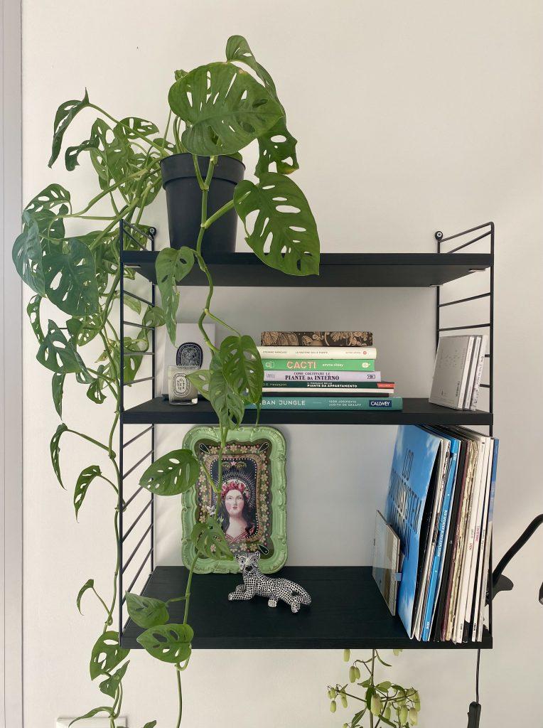 piante-pendenti-monstera