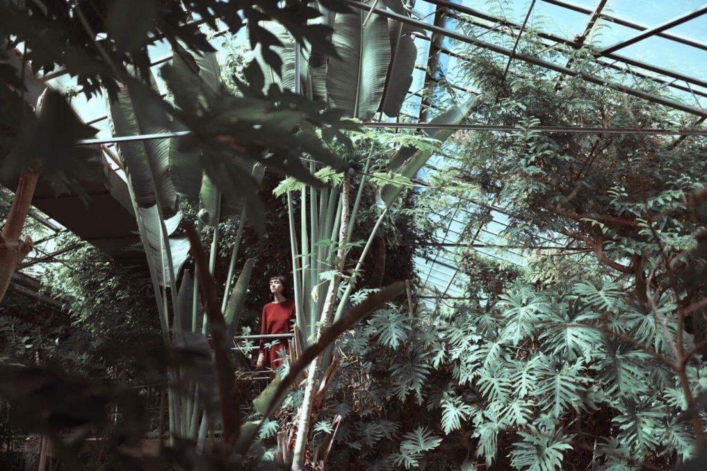 pianta da appartamento 2