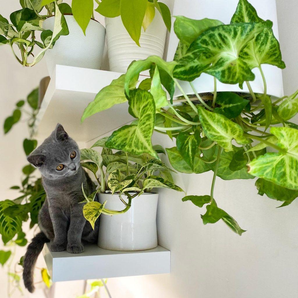 piante e gatti