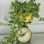 piante in cucina
