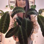plantofolai