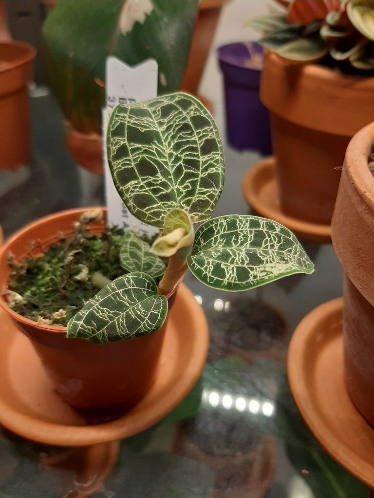 pianta rara