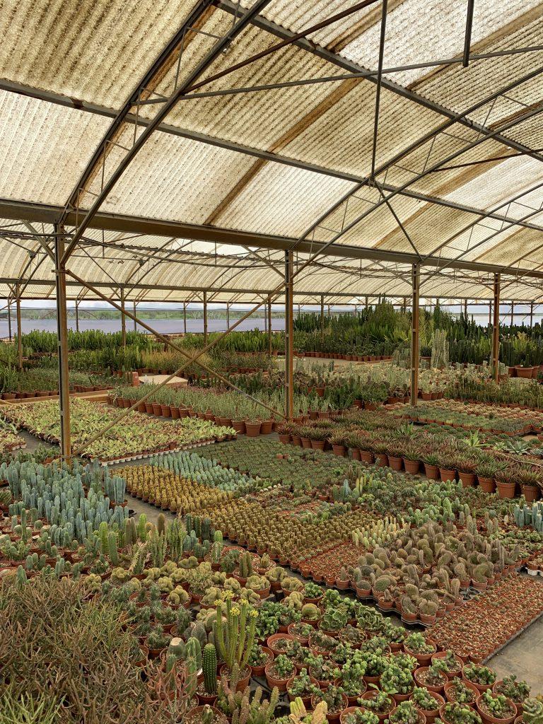 vivaio di piante grasse a roma