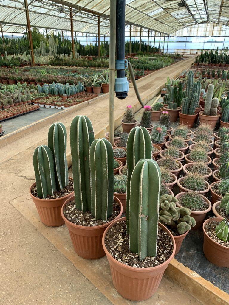 piante grasse a roma