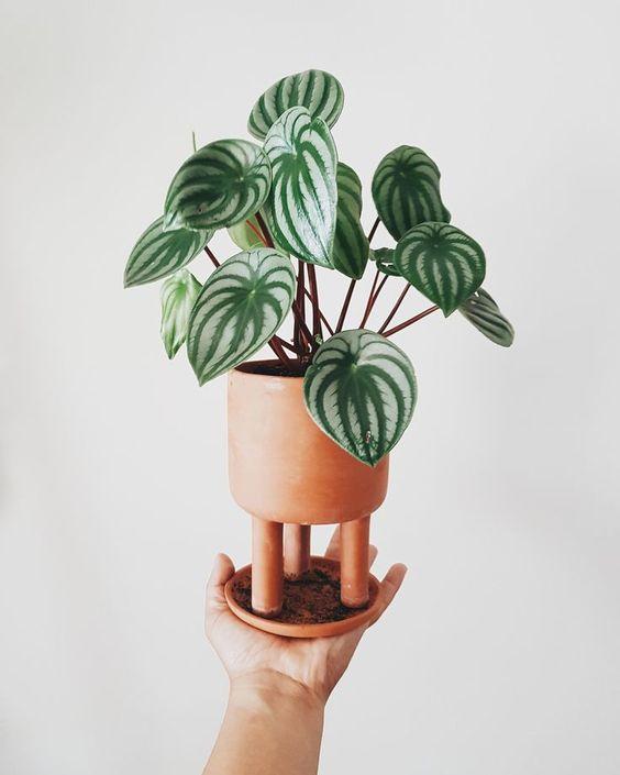 piante non velenose per gatti 2