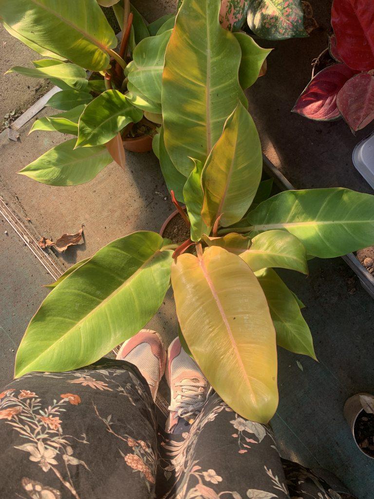 the cool plant shop